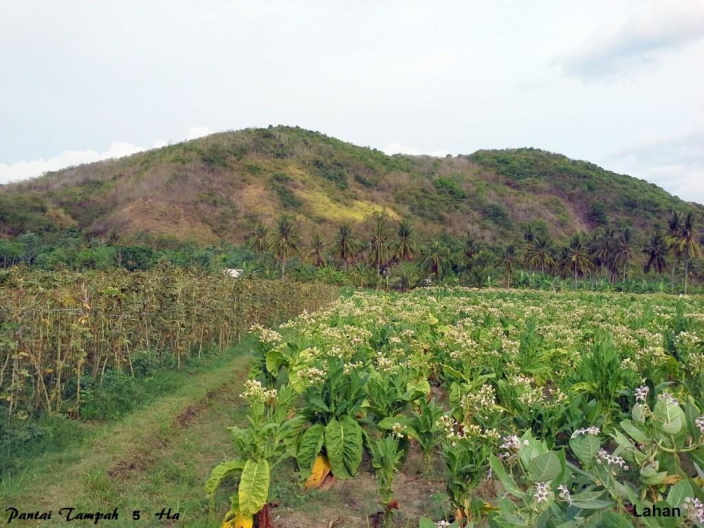 land-for-sale-tampah-village- (11)