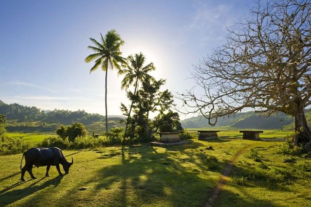 sumba island 6